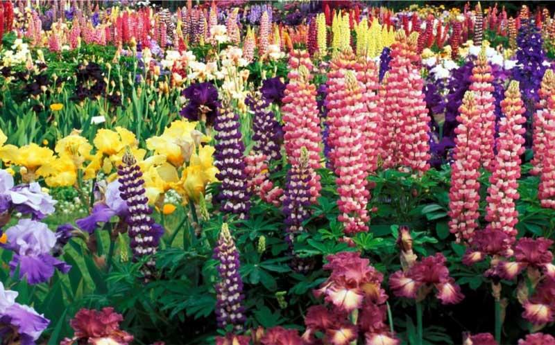 garden-edging-lm