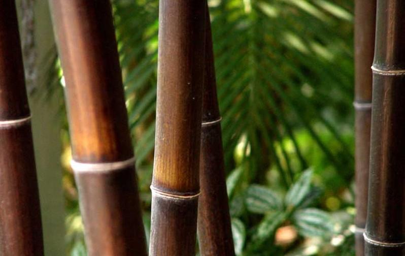 black-bamboo-lattice-makers