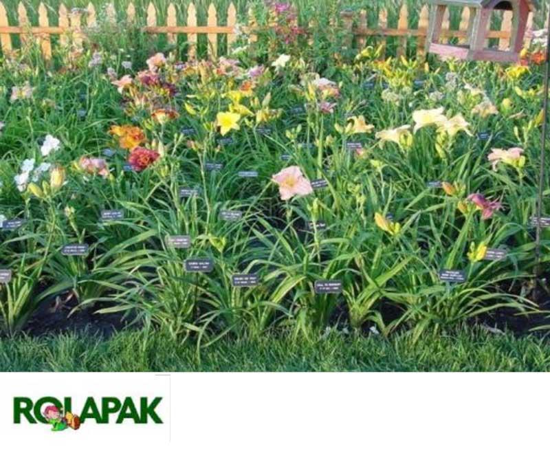 border-garden-edging